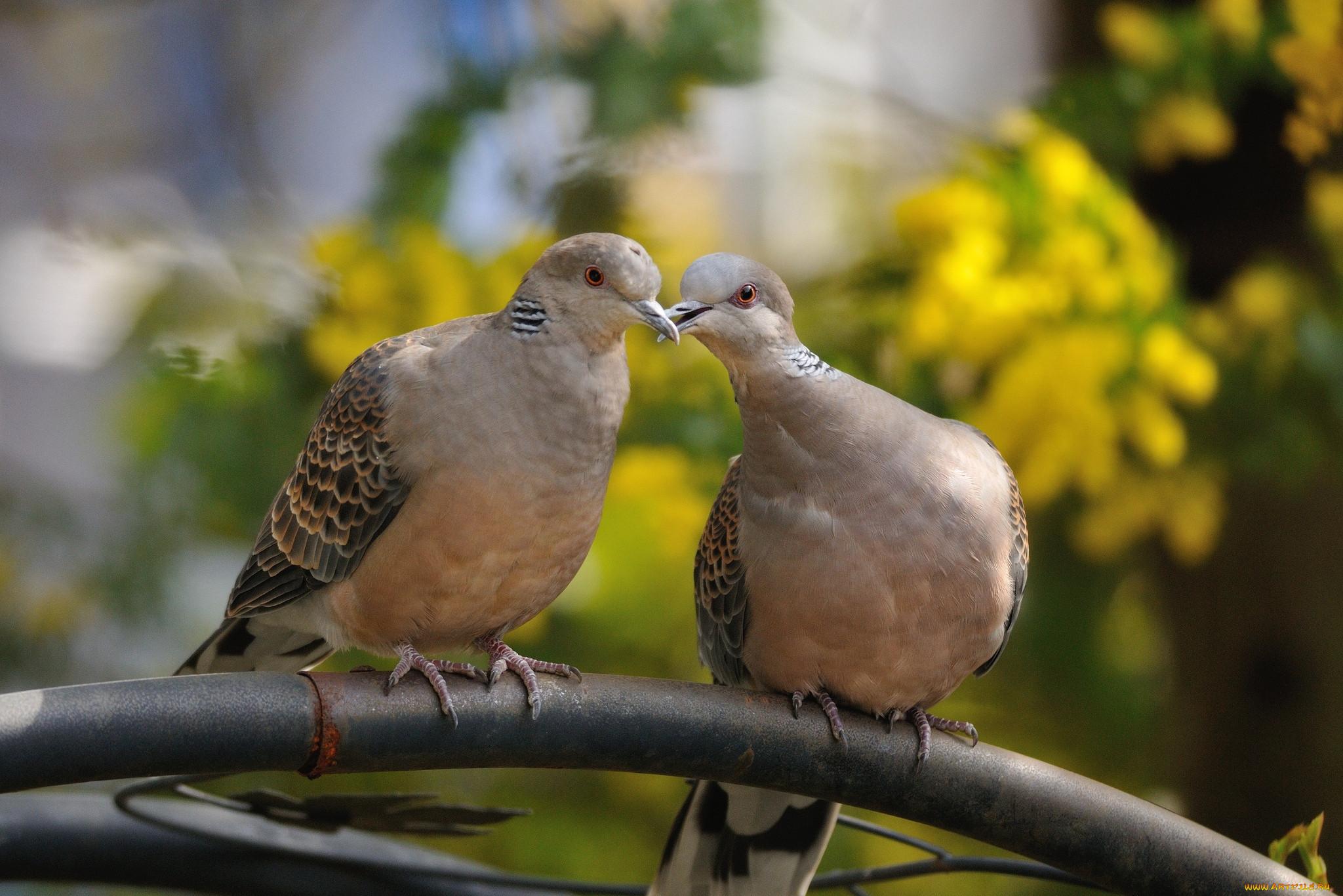 расставаний голубь обнимает картинки они право моих